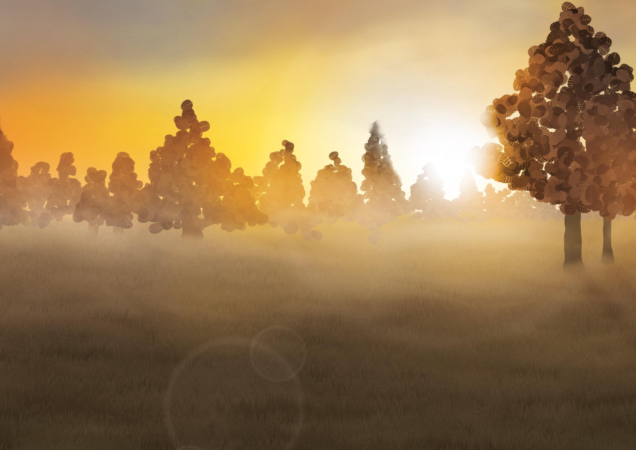 Oranje zon door de bomen