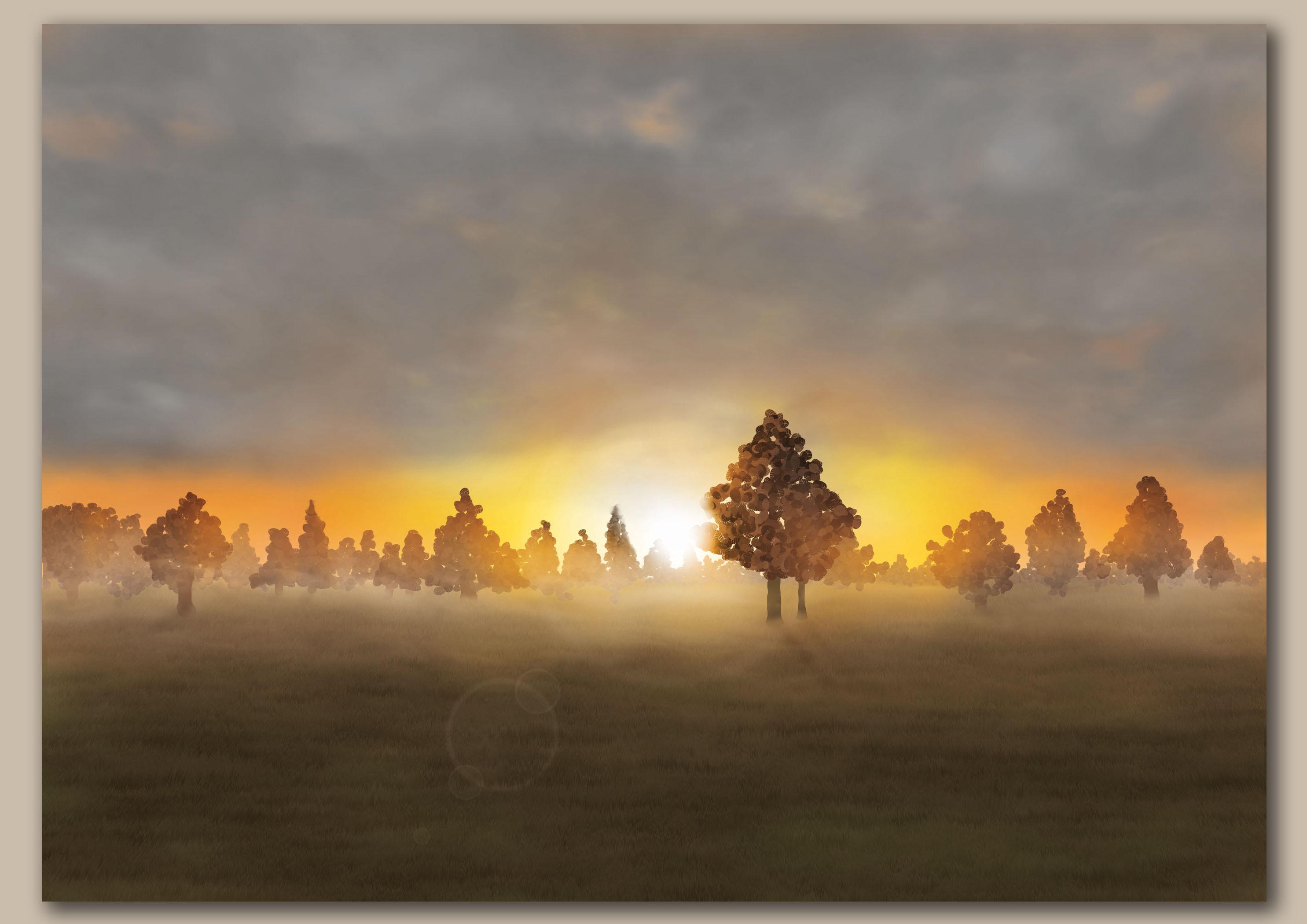 Opkomende zon door bomen over een weiland met lensflare
